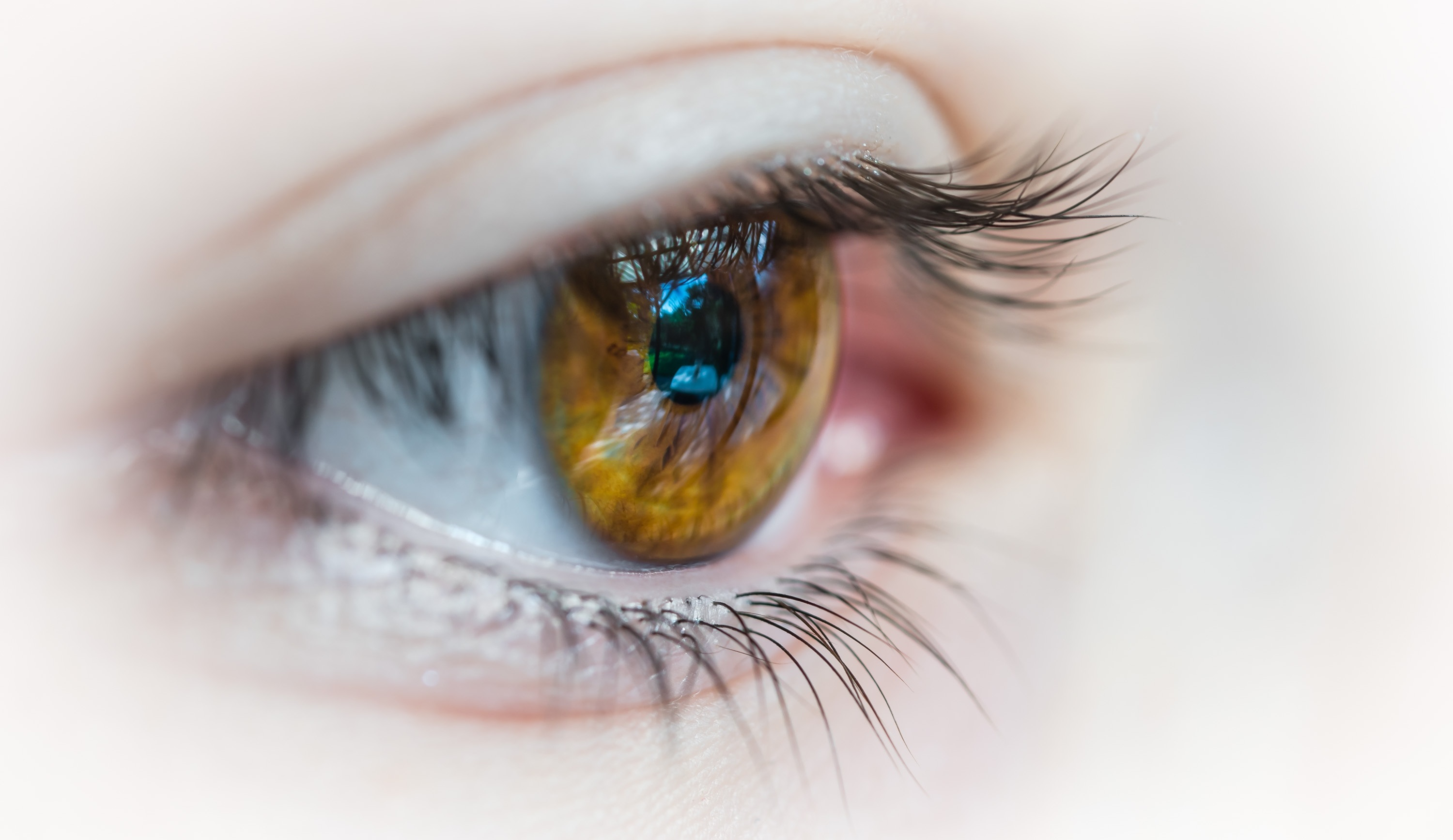 Lutein and Zeaxanthin for your Eyes