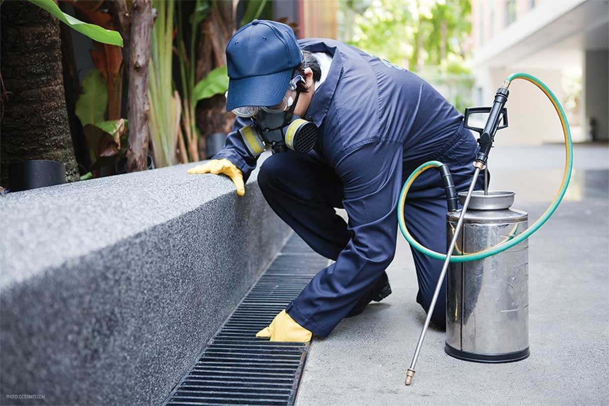 Importance of Electronic Pest Control Services