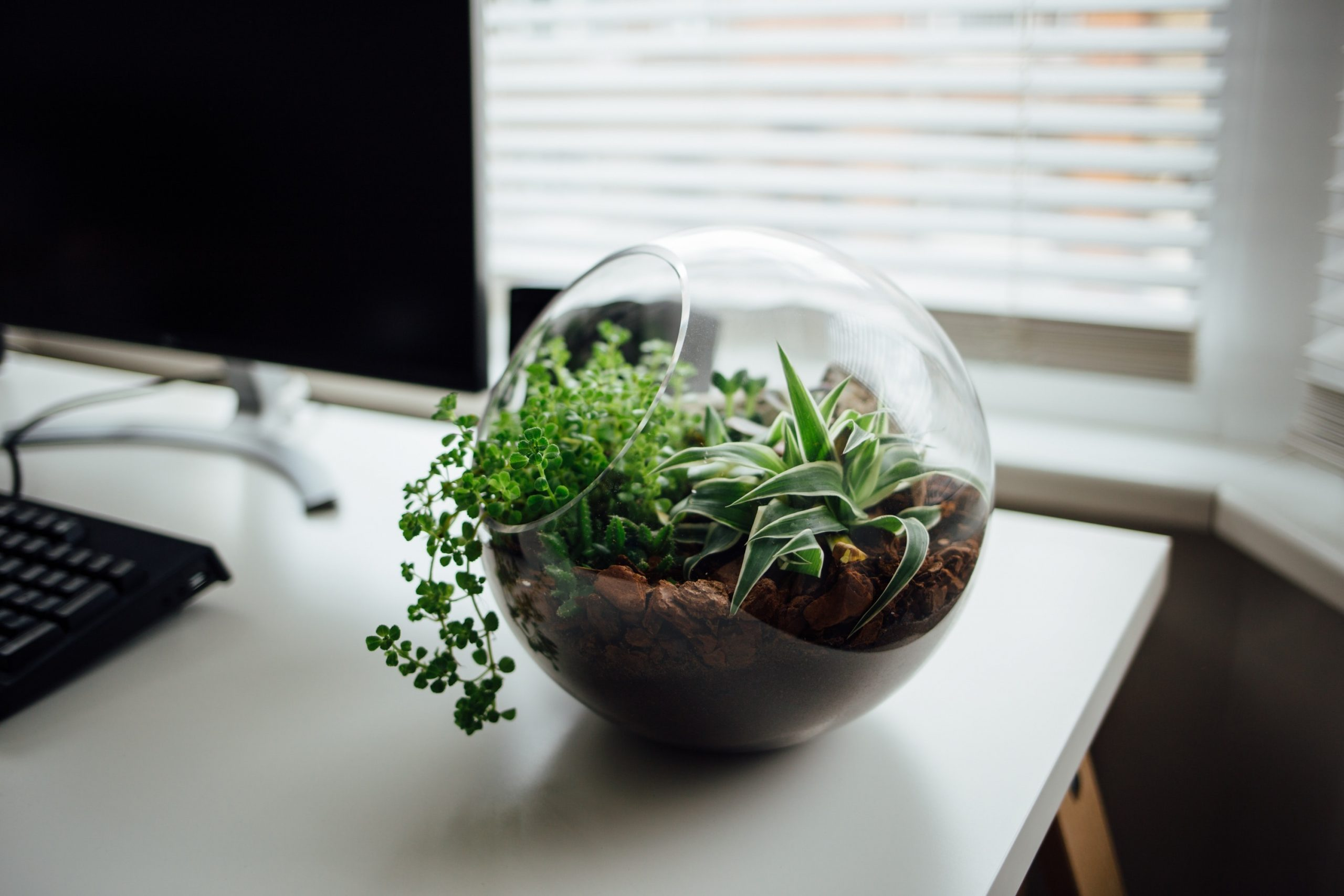 Why Should You Have Plants in Your Office?