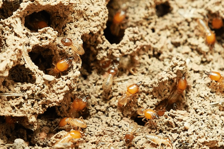 Four Common Signs there is Termite Infestation in your Home