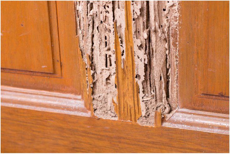 4 Signs of a Termite Infestation Everyone Needs to Know