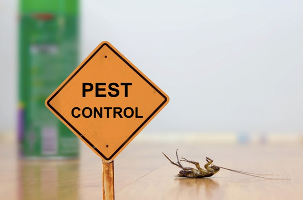 DIY Pest Control: Tips for Keeping Pests Out of Your Home