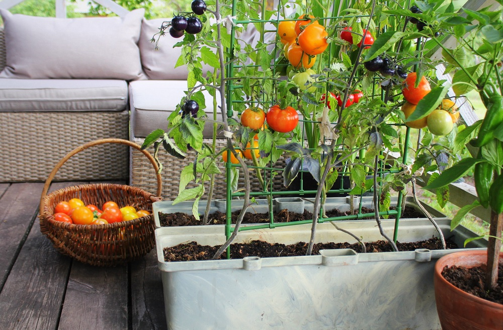 Things To Remember While Growing Vegetables In A Small Space