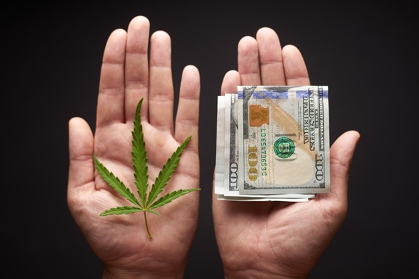 4 Emerging Cannabis Market Trends to Watch