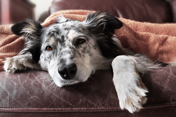 CBD for Pets: How to Help Your Furry Friend