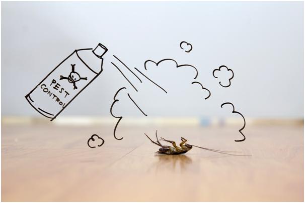 4 Major Signs You Have a Pest Problem
