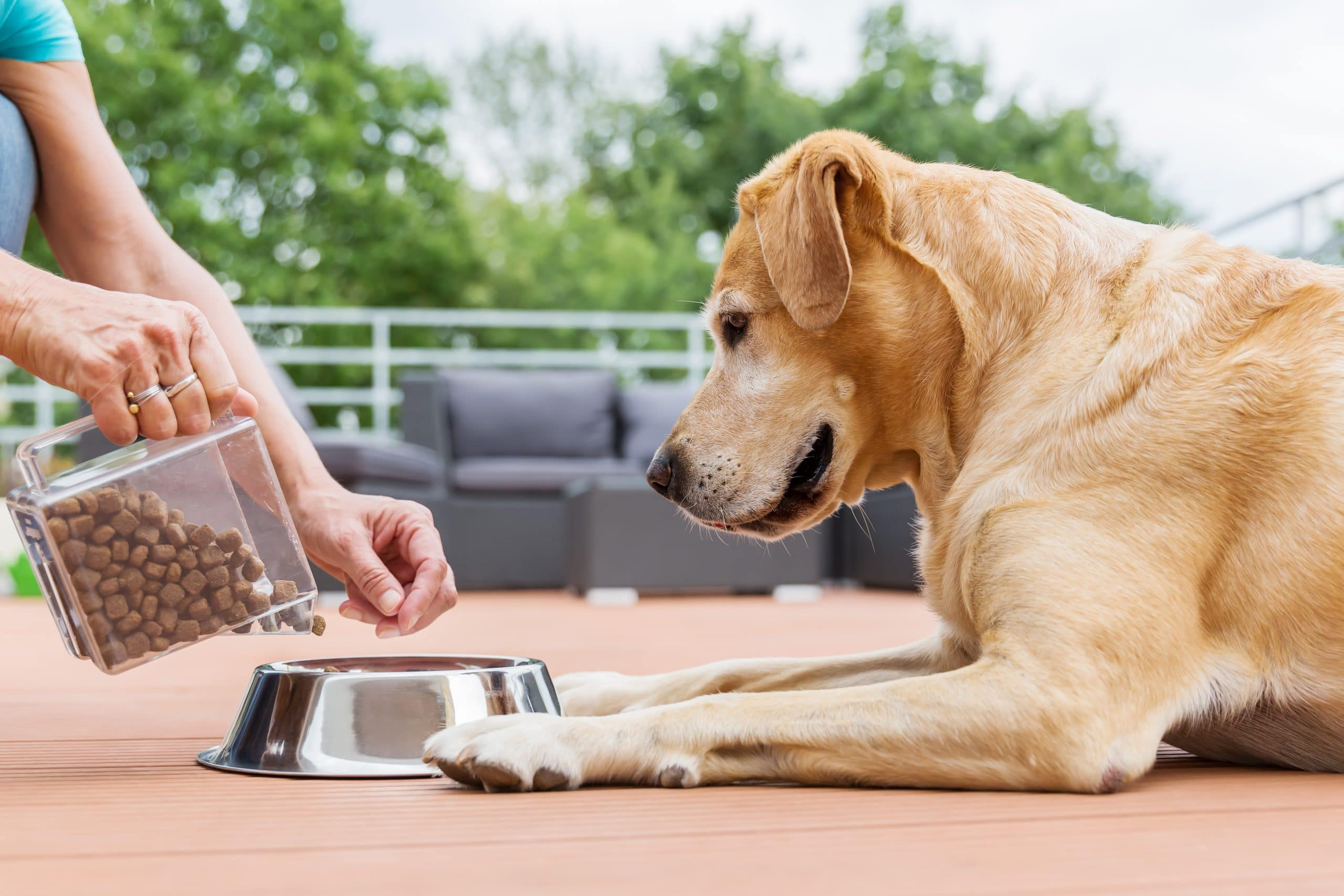 What You Need to Know About Natural Dog Food