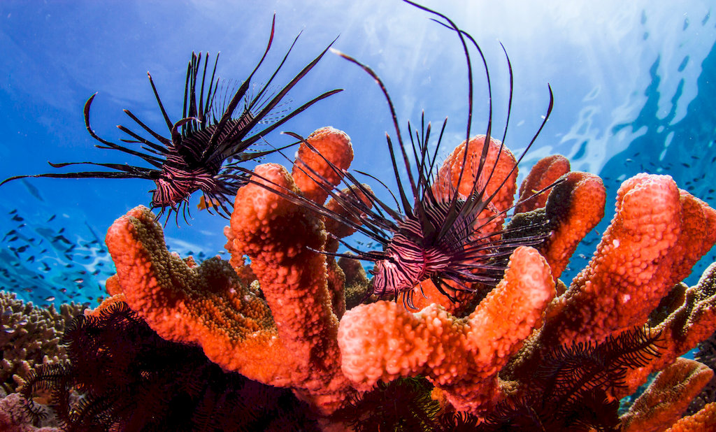Find The Reasons Why Corals Change Their Colour
